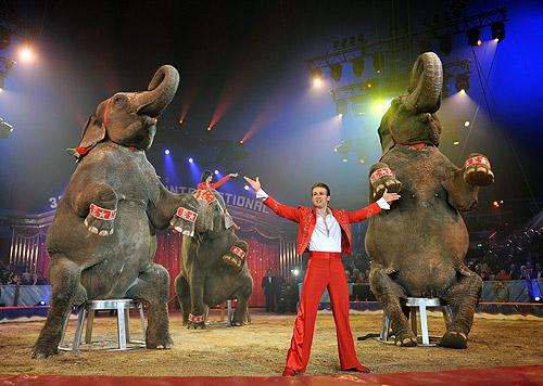 Elefanten Errani