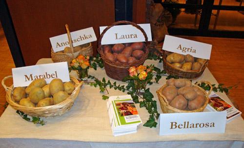 NZ Kartoffelsorten 2013