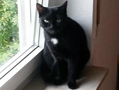 Katze Feriendorf