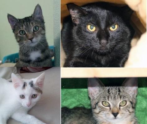 500 Katzenkinder Tierheim Dallau