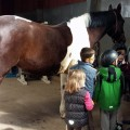 NZ-Kinder-mit-dem-Schulpferd-Lambada.jpg