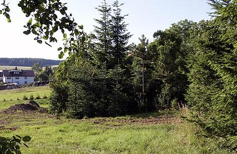 wpid-468-baeume-Ortschaftsrat-tagte-auf-zwei-Beinen-2011-07-1-07-33.jpg