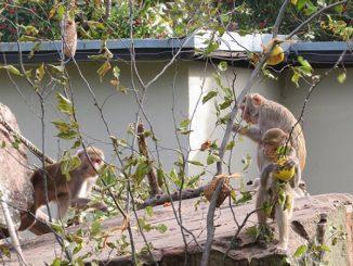 Affenbrotbaum Zoo HD
