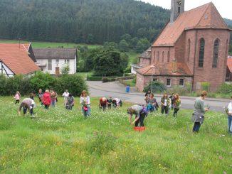 Hettigenbeuern: Kräutersammlung im Morretal