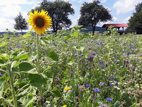 Blumen und Kräuter für Kinderherzen thumbnail