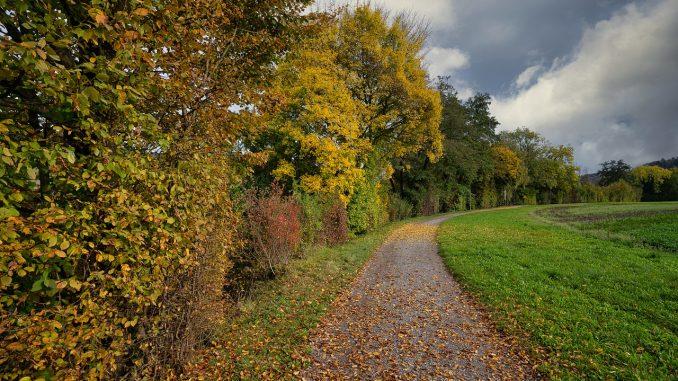Autumn Away Lane Nature Landscape