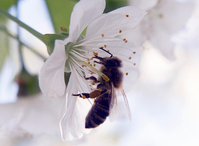 """Rettet Die Bienen: Volksbegehren """"Rettet Die Bienen!"""" » NOKZEIT"""